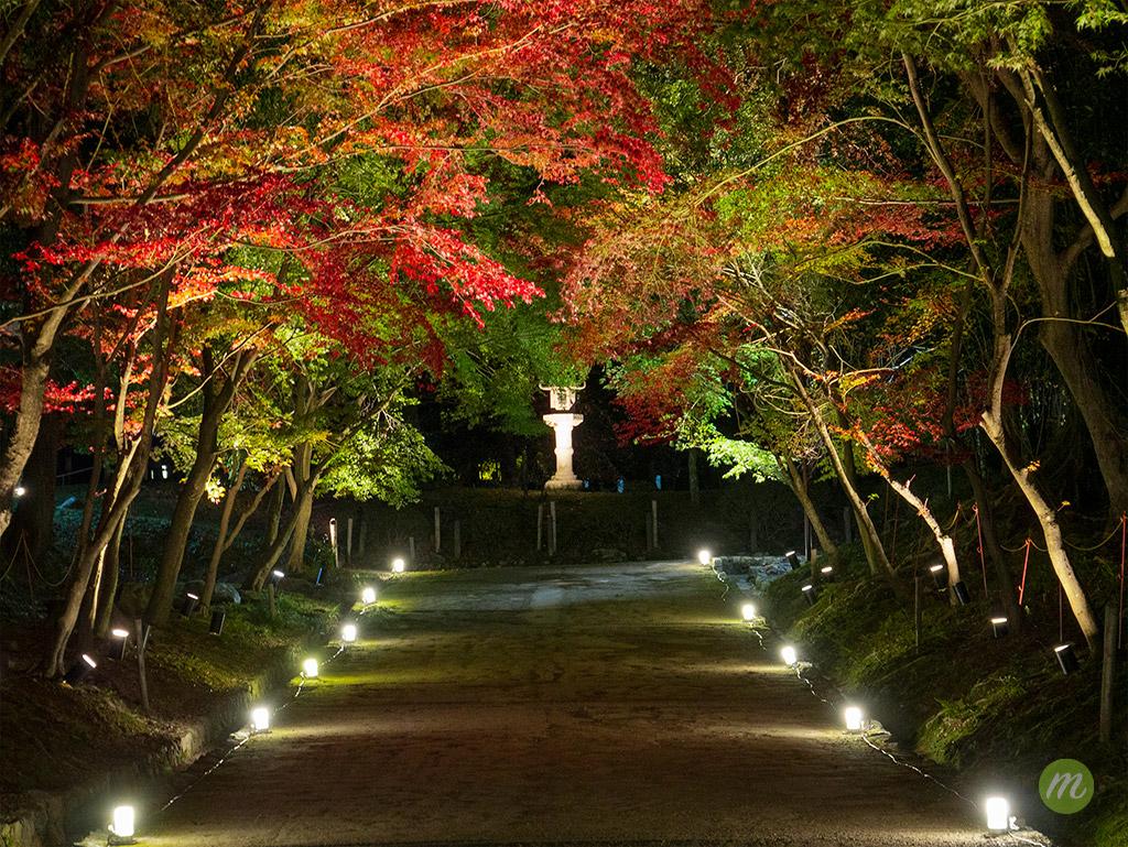 醍醐寺 西大門入ってすぐの道