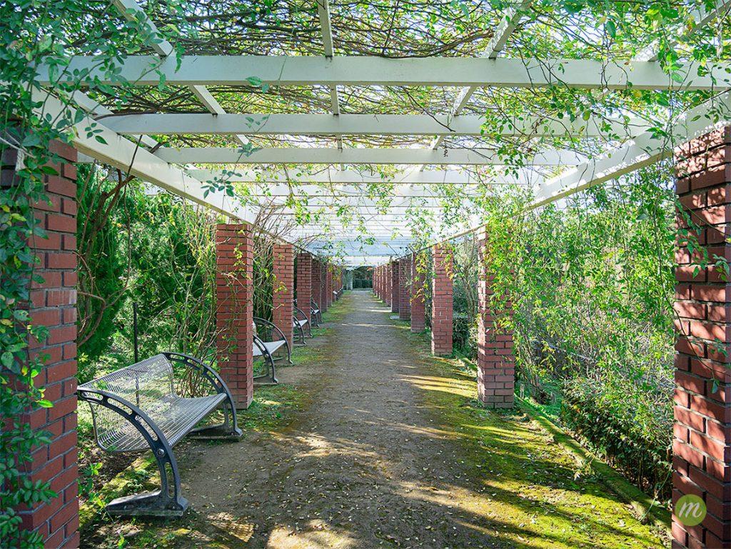 蔦のトンネル